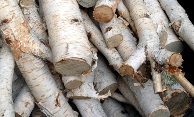 Silver birch logs which looked too beautiful to burn!