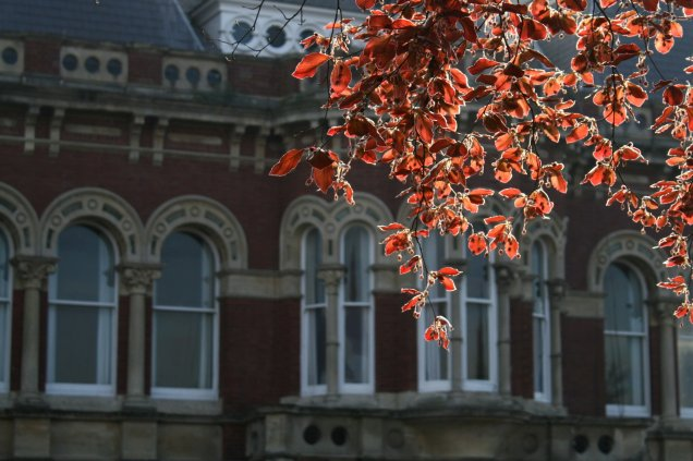 Copper beech outside the Grantham Guildhall on St Peter's Hill