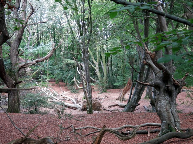 New forest woodland