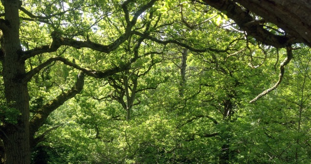What appears a cluttered woodland interior from the ground could be much more open and 'edge' in character in the canopy - we must consider habitats from a bat's viewpoint rather than our own.