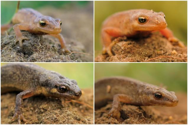 Toads&Newts.jpg