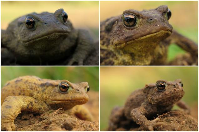toadsnewts1
